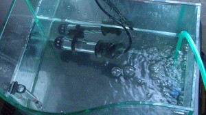 Hatching/fry rearing tank for desert goby